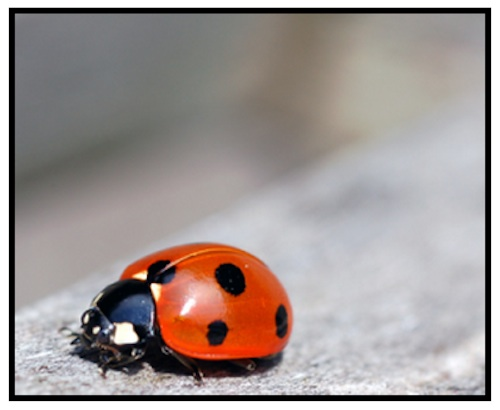 MS Delta Ladybugs along the Mississippi River