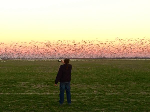Poor William filming Mississippi Delta Snow Geese near Clarkdale. ©2014 DELTA BOHEMIAN®