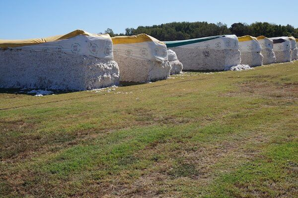 Cotton modules waiting to be processed in Coahoma County near Clarksdale. Photo by Andrea Vlonk