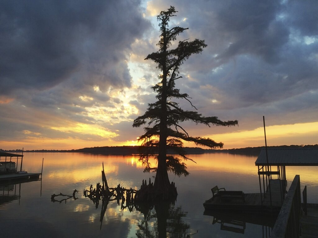 Cypress tree at sunset on Moon Lake in the Mississippi Delta ©2015 DELTA BOHEMIAN®