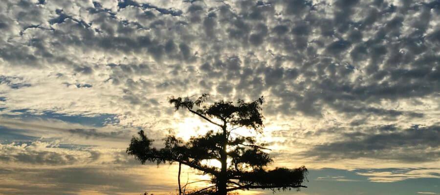 Moon Lake, Mississippi ©2016 The Delta Bohemian®