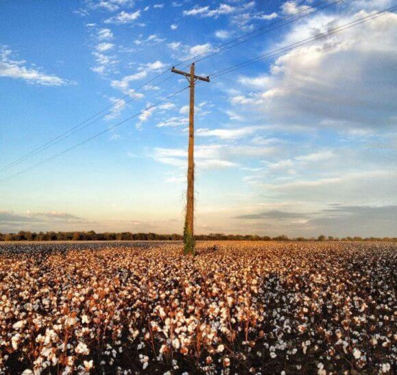 Mississippi Delta cotton field ©The Delta Bohemian