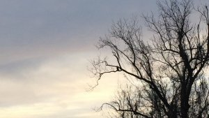 Can you see him? Delta Wildlife. Bald Eagle