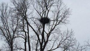 Eagle's Nest. Delta Wildlife